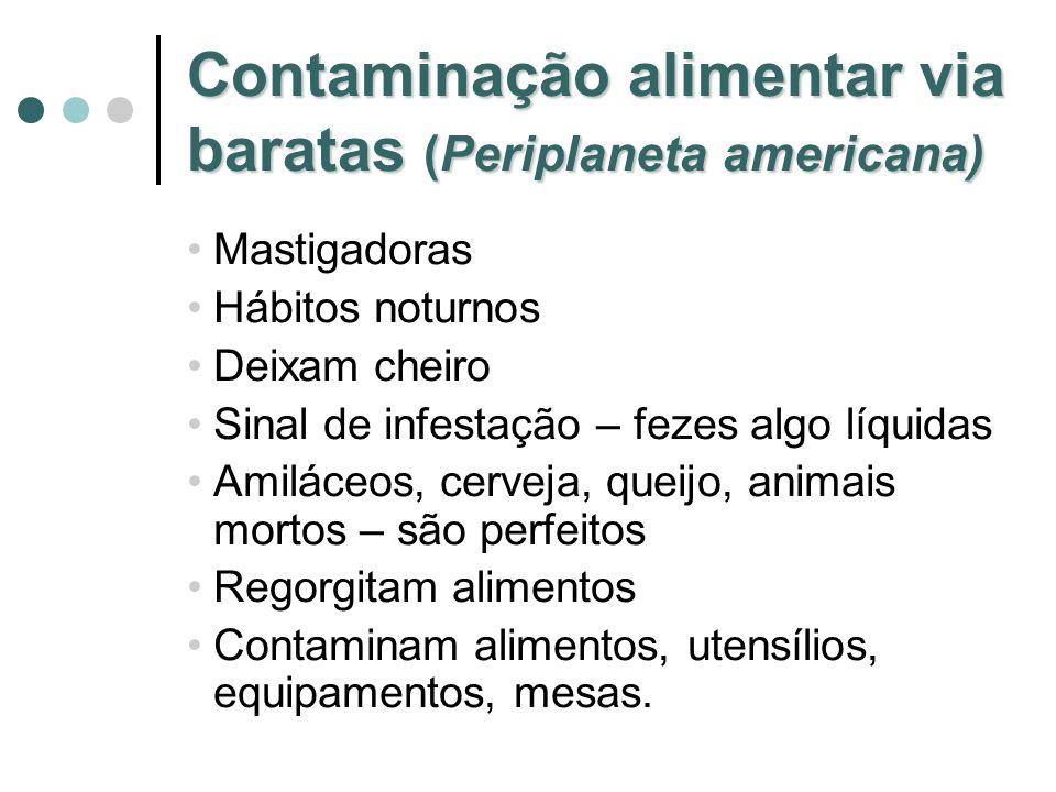Contaminação alimentar via baratas (Periplaneta americana) Mastigadoras Hábitos noturnos Deixam cheiro Sinal de infestação – fezes algo líquidas Amilá