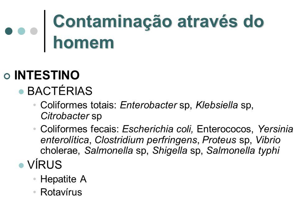 Contaminação através do homem INTESTINO BACTÉRIAS Coliformes totais: Enterobacter sp, Klebsiella sp, Citrobacter sp Coliformes fecais: Escherichia col