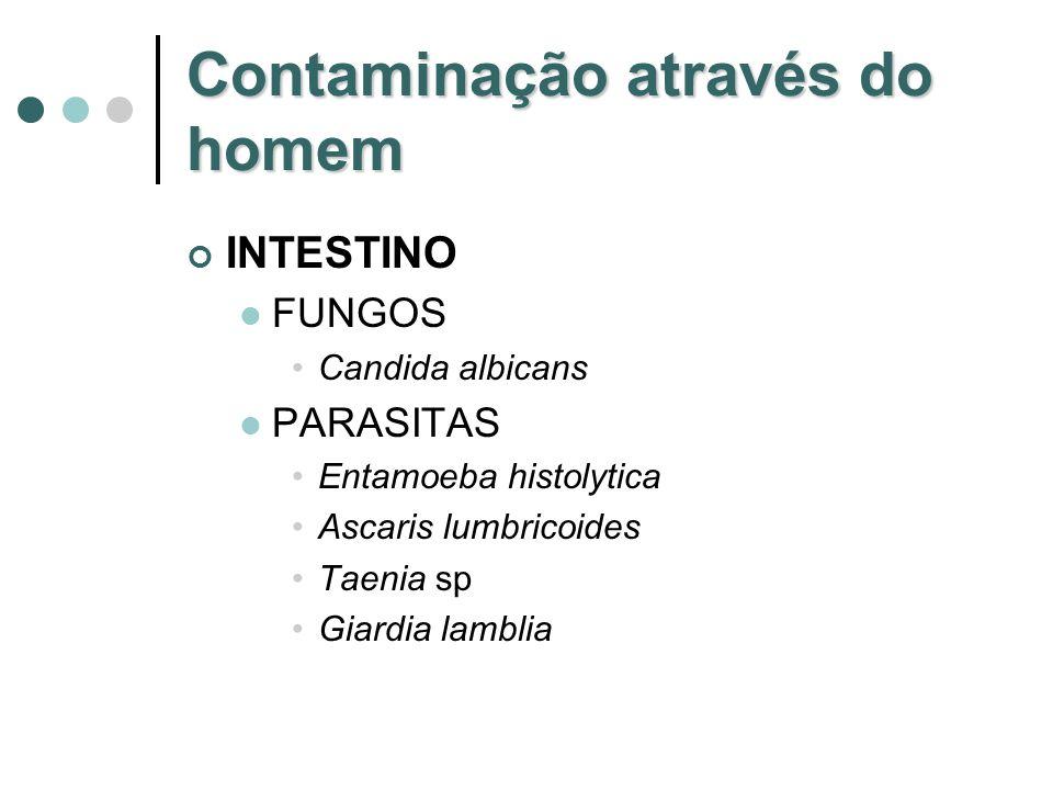 Contaminação através do homem INTESTINO FUNGOS Candida albicans PARASITAS Entamoeba histolytica Ascaris lumbricoides Taenia sp Giardia lamblia