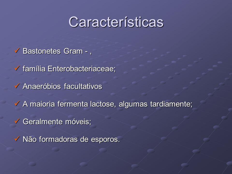 Características Bastonetes Gram -, Bastonetes Gram -, família Enterobacteriaceae; família Enterobacteriaceae; Anaeróbios facultativos Anaeróbios facul