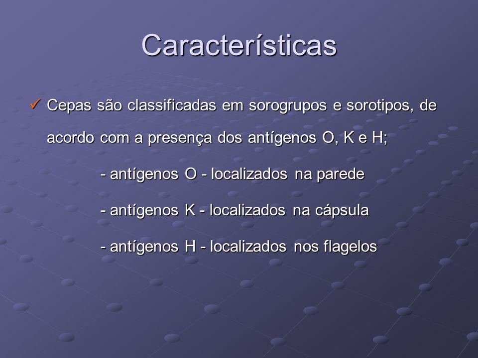 Características Cepas são classificadas em sorogrupos e sorotipos, de acordo com a presença dos antígenos O, K e H; Cepas são classificadas em sorogru