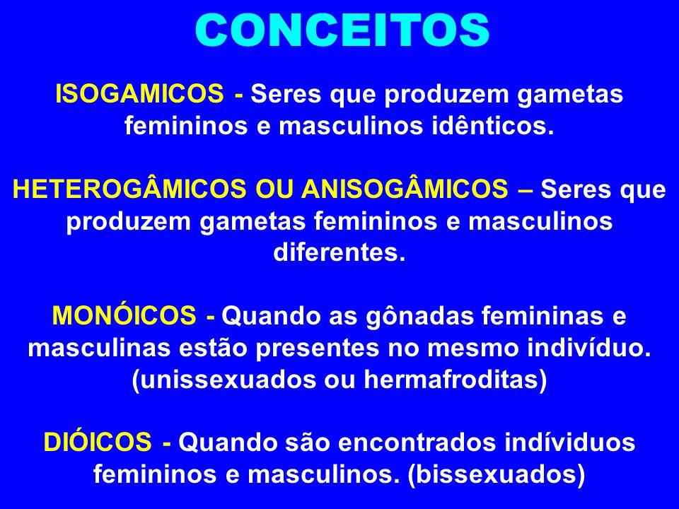 TIPOS DE GAMETAS ISOGAMIA HETEROGAMIA OOGAMIA