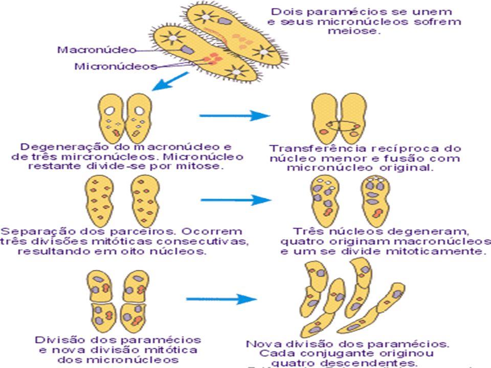 FECUNDAÇÃO INTERNA - Ocorre dentro de um organismo. FECUNDAÇÃO EXTERNA - Ocorre no ambiente - água. FECUNDAÇÃO CRUZADA - Os gametas que se unem são pr