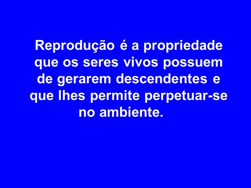 REPRODUÇÃO Edilson Soares