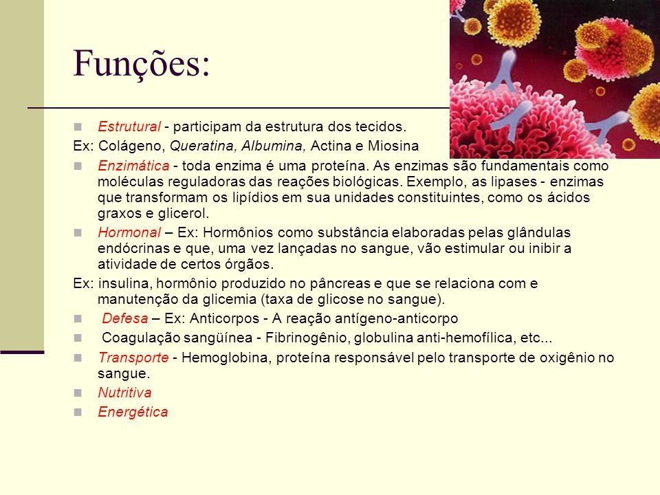 Funções: Estrutural - participam da estrutura dos tecidos. Ex: Colágeno, Queratina, Albumina, Actina e Miosina Enzimática - toda enzima é uma proteína