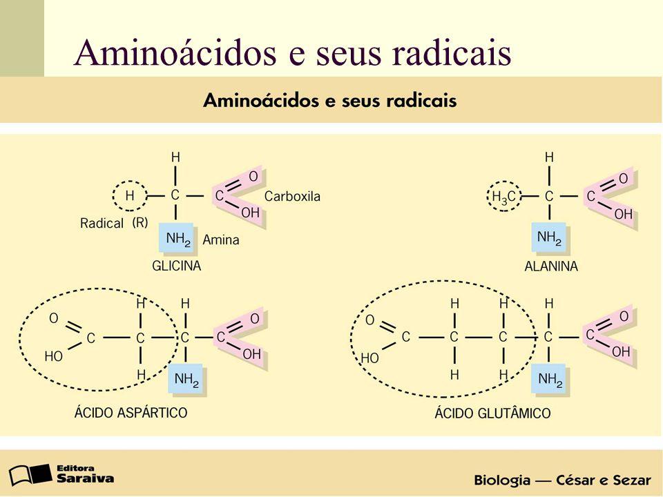 Aminoácidos e seus radicais