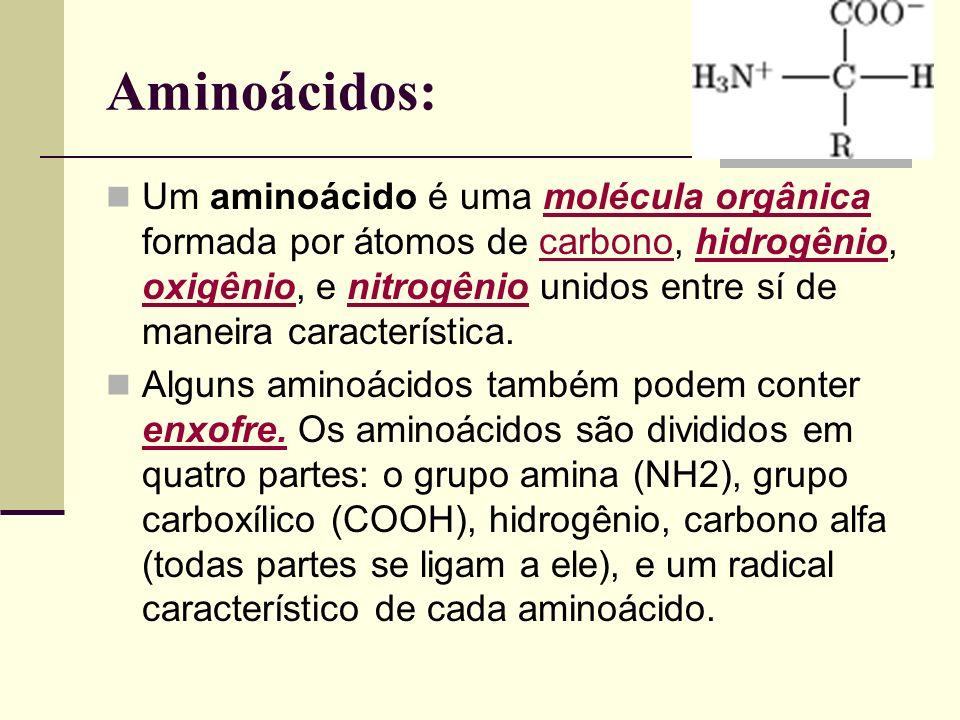 Aminoácidos: Um aminoácido é uma molécula orgânica formada por átomos de carbono, hidrogênio, oxigênio, e nitrogênio unidos entre sí de maneira caract