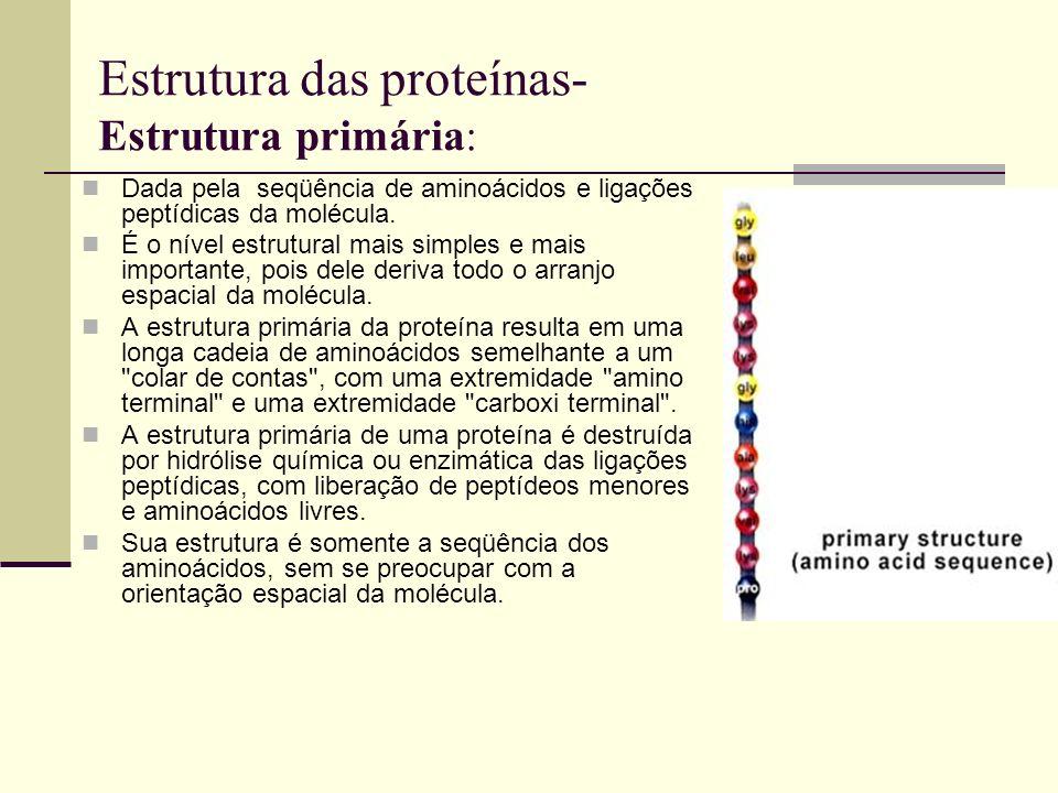 Estrutura das proteínas- Estrutura primária: Dada pela seqüência de aminoácidos e ligações peptídicas da molécula. É o nível estrutural mais simples e