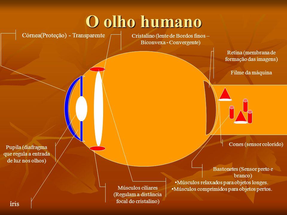 Óptica da Visão Prof. Zé Godinho Física – 2º Ano EM