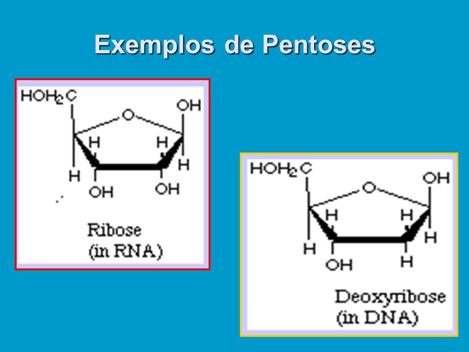 Exemplos de Pentoses