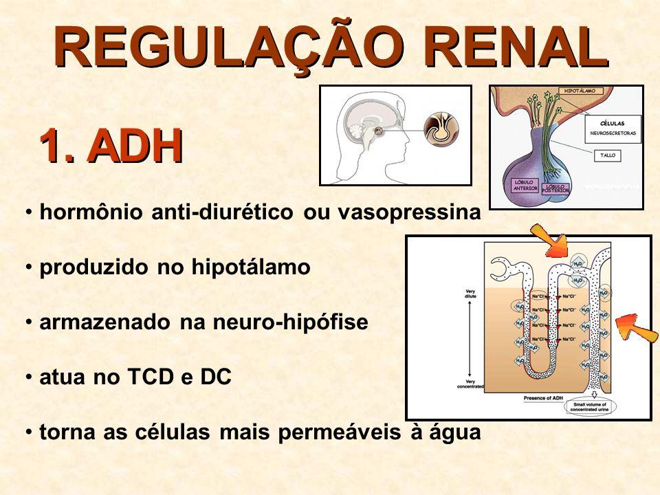 REGULAÇÃO RENAL maior reabsorção de água o volume da urina o volume de sangue dilui o sangue 1.