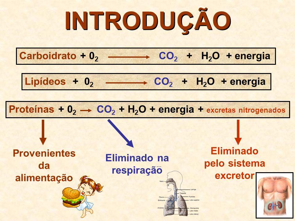 EXCRETAS NITROGENADOS provenientes do metabolismo das proteínas H H C NH 2 C O OH amina ácido