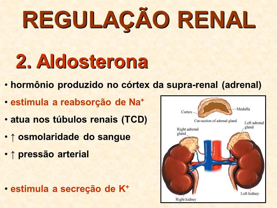REGULAÇÃO RENAL 2.