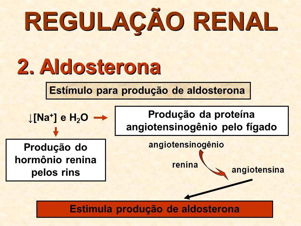 REGULAÇÃO RENAL 2. Aldosterona Estímulo para produção de aldosterona