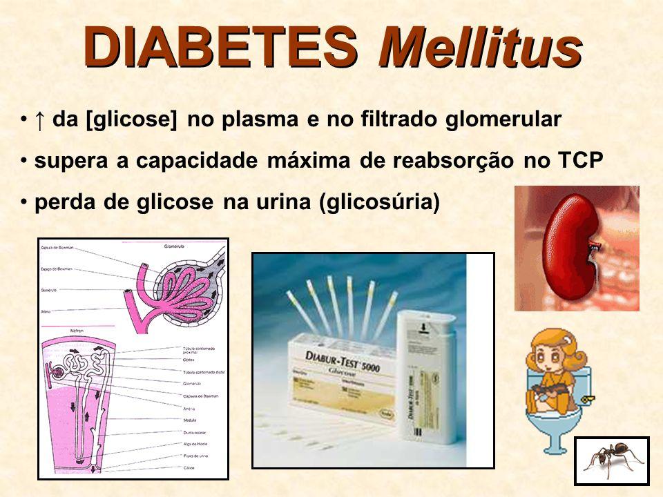 DIABETES Mellitus da [glicose] no ducto coletor pressão osmótica da urina perda de água na urina sede