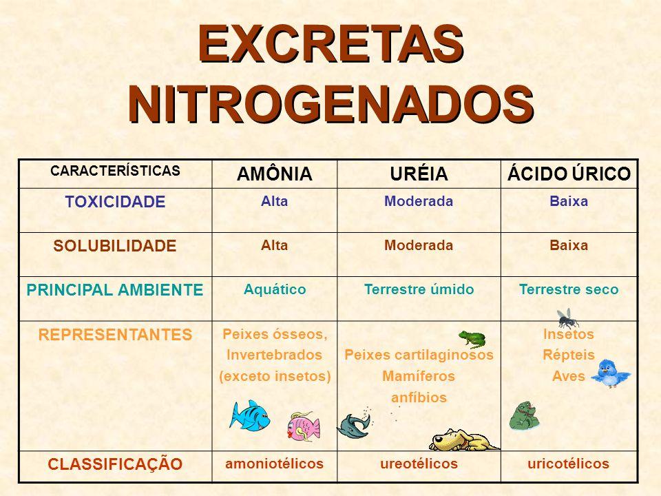 EXCRETAS NITROGENADOS Amônia Uréia Ácido úrico Ciclo da ornitina Ciclo do ácido úrico