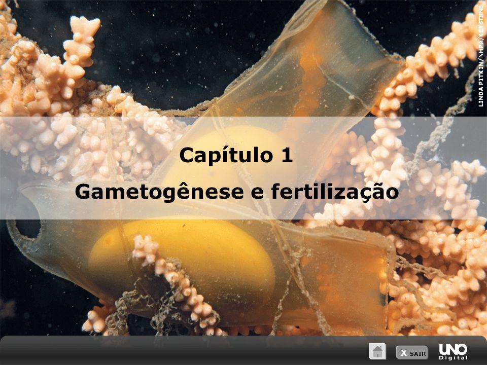 Capítulo 1 Gametogênese e fertilização LINDA PITKIN/NHPA/KEYSTONE X SAIR