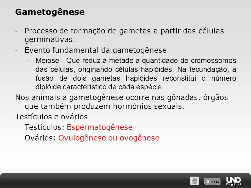 X SAIR Gametogênese Processo de formação de gametas a partir das células germinativas. Evento fundamental da gametogênese Meiose - Que reduz à metade