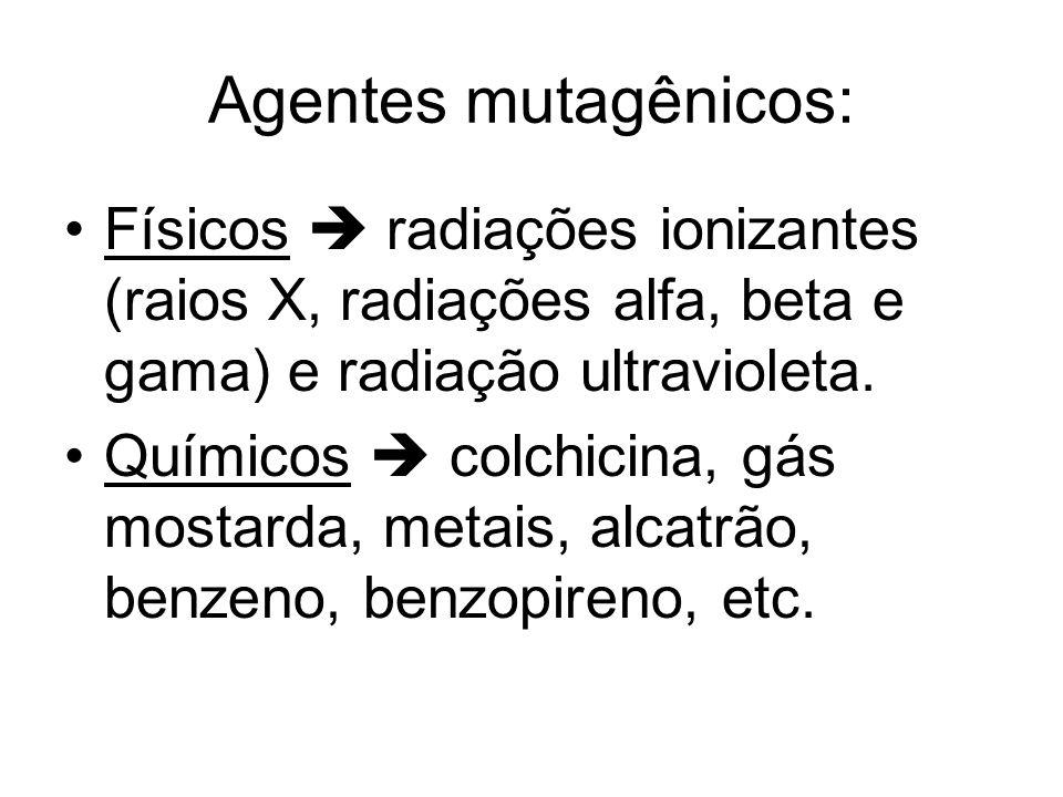Agentes mutagênicos: Físicos radiações ionizantes (raios X, radiações alfa, beta e gama) e radiação ultravioleta. Químicos colchicina, gás mostarda, m