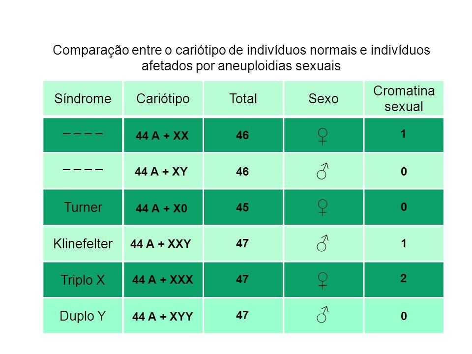 SíndromeCariótipoTotalSexo Cromatina sexual _ _ Turner Klinefelter Triplo X Duplo Y Comparação entre o cariótipo de indivíduos normais e indivíduos af