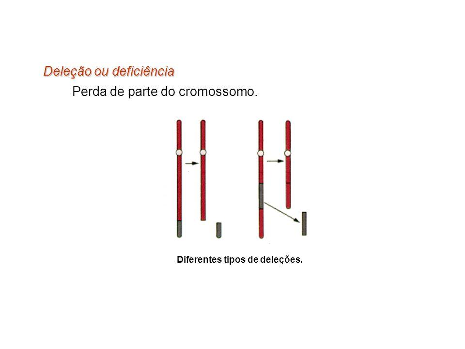 Deleção ou deficiência Perda de parte do cromossomo. Diferentes tipos de deleções.