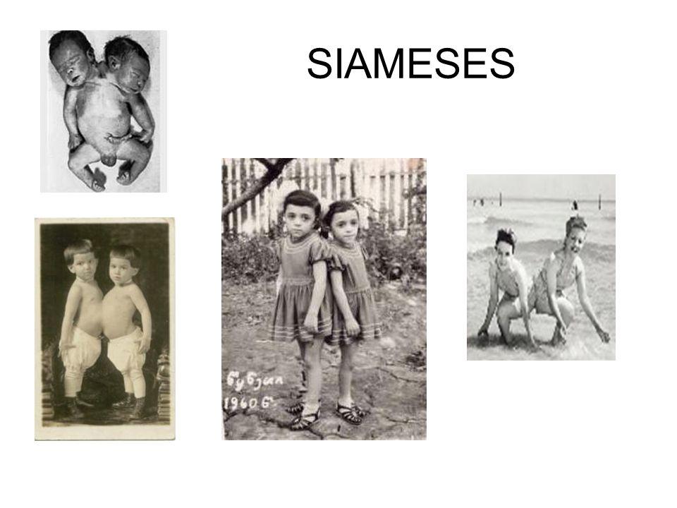 SIAMESES
