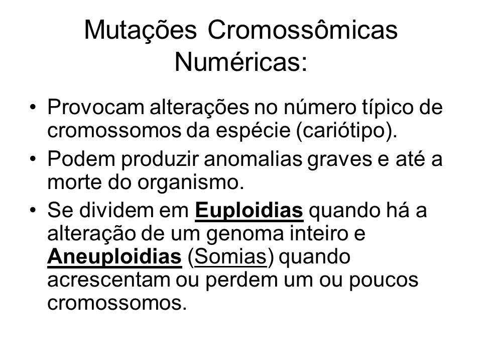 Provocam alterações no número típico de cromossomos da espécie (cariótipo). Podem produzir anomalias graves e até a morte do organismo. Se dividem em