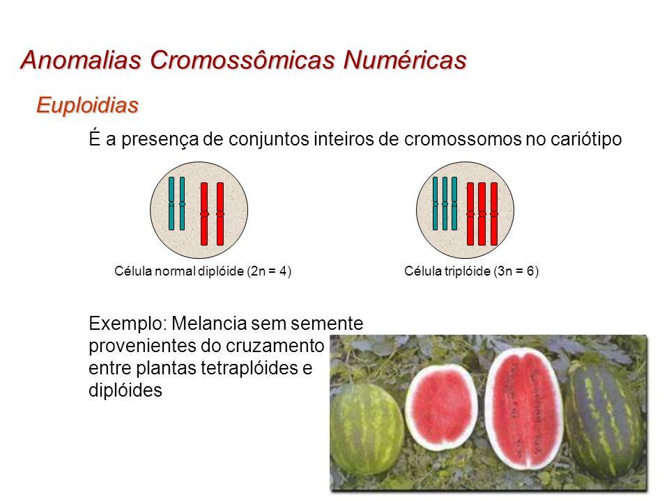 Anomalias Cromossômicas Numéricas Euploidias É a presença de conjuntos inteiros de cromossomos no cariótipo Célula normal diplóide (2n = 4)Célula trip