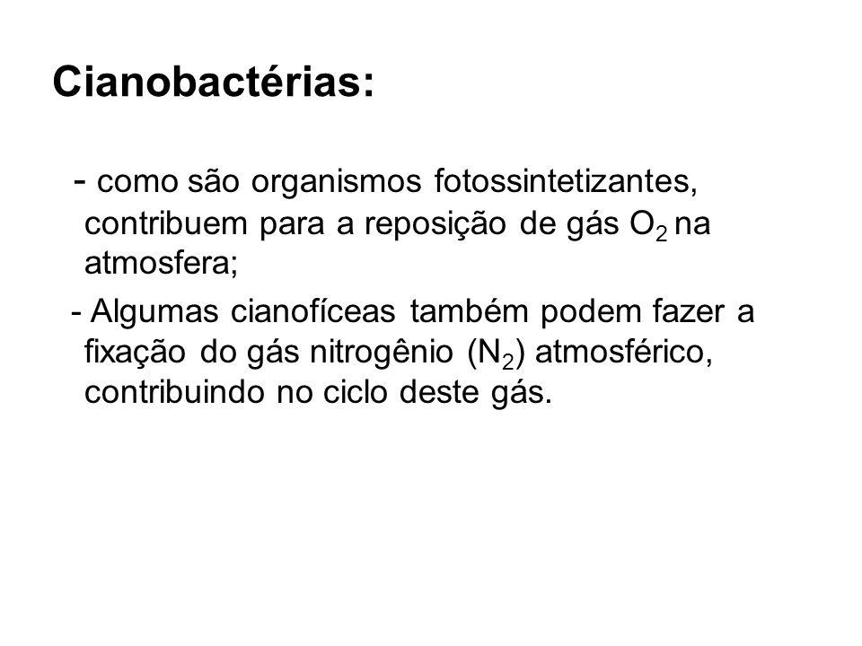 Cianobactérias: - como são organismos fotossintetizantes, contribuem para a reposição de gás O 2 na atmosfera; - Algumas cianofíceas também podem faze