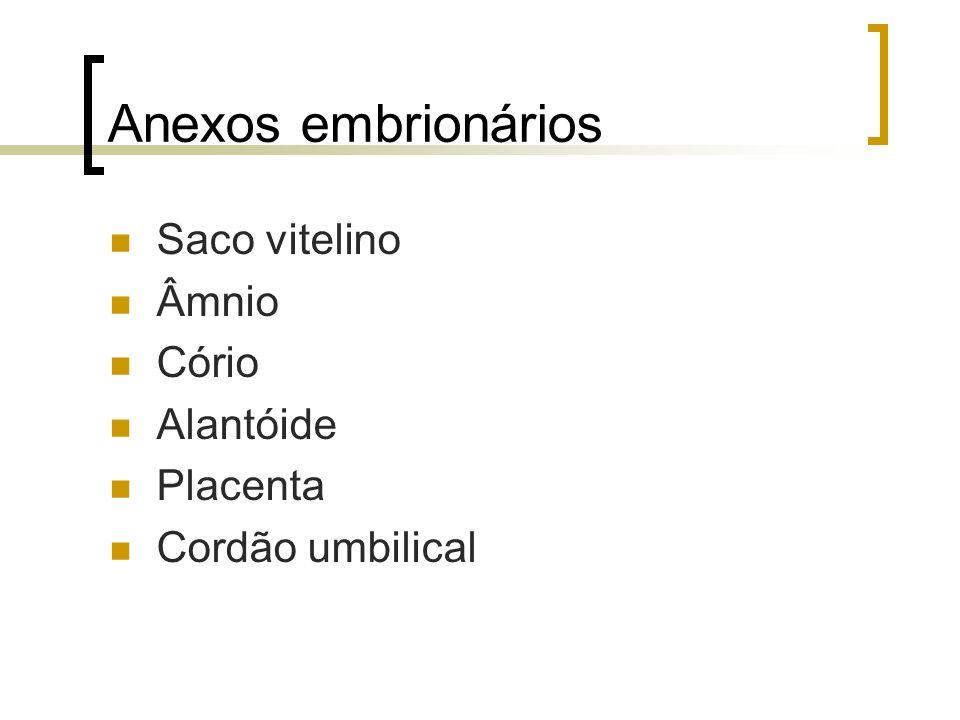 Anexos embrionários Saco vitelino Âmnio Cório Alantóide Placenta Cordão umbilical