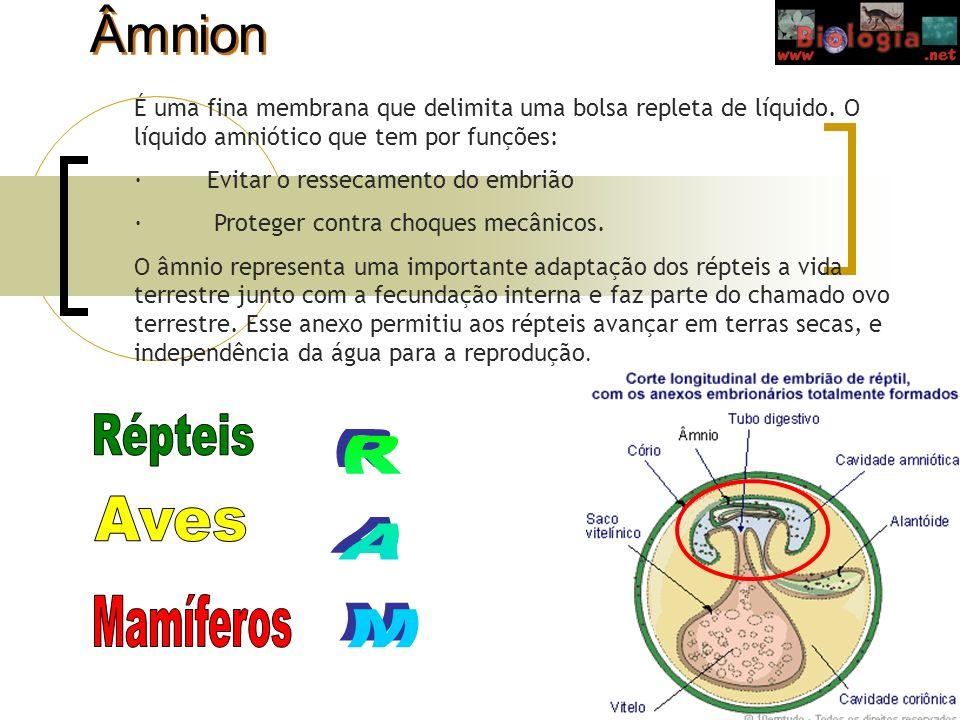 Âmnion É uma fina membrana que delimita uma bolsa repleta de líquido. O líquido amniótico que tem por funções: · Evitar o ressecamento do embrião · Pr