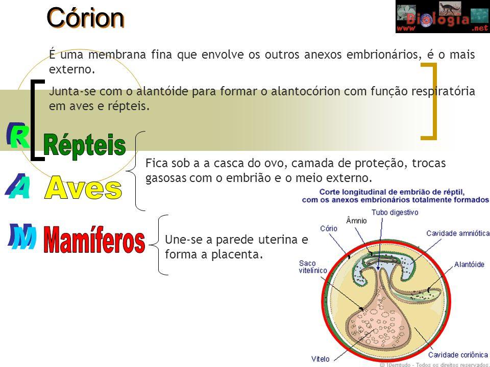 Córion É uma membrana fina que envolve os outros anexos embrionários, é o mais externo. Junta-se com o alantóide para formar o alantocórion com função