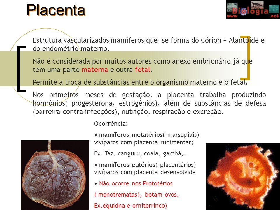 Placenta Estrutura vascularizados mamíferos que se forma do Córion + Alantóide e do endométrio materno. maternafetal Não é considerada por muitos auto