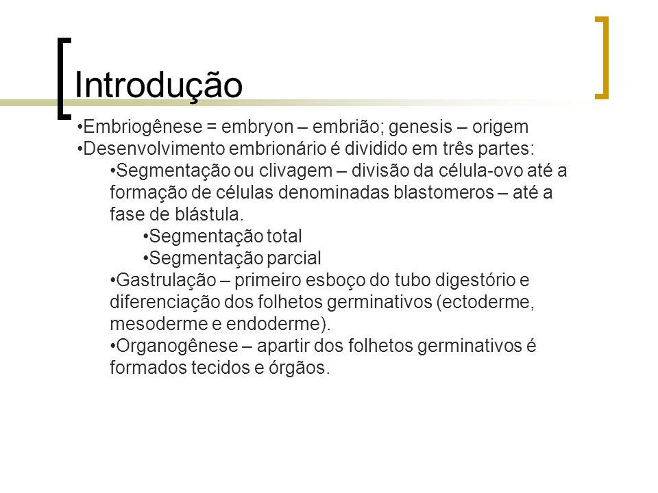 Introdução Embriogênese = embryon – embrião; genesis – origem Desenvolvimento embrionário é dividido em três partes: Segmentação ou clivagem – divisão