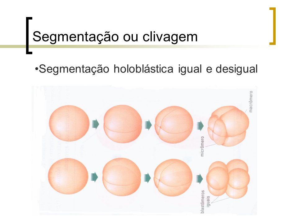Segmentação meroblástica discoidal e superficial