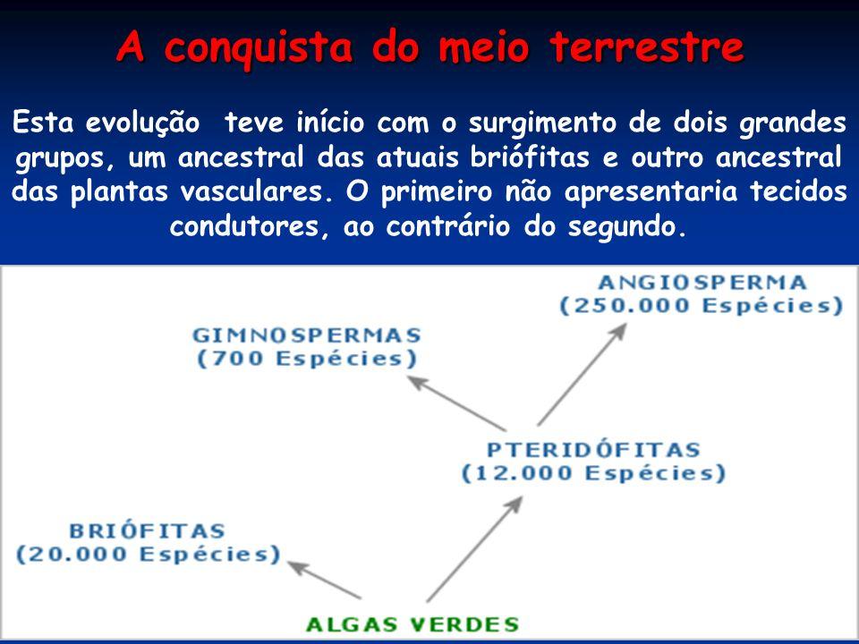 REINO METAPHITA Reino Plantae ou Reino Vegetalia Profº Edilson Soares