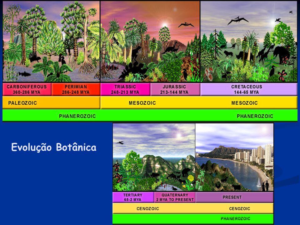 A conquista do meio terrestre Esta evolução teve início com o surgimento de dois grandes grupos, um ancestral das atuais briófitas e outro ancestral d