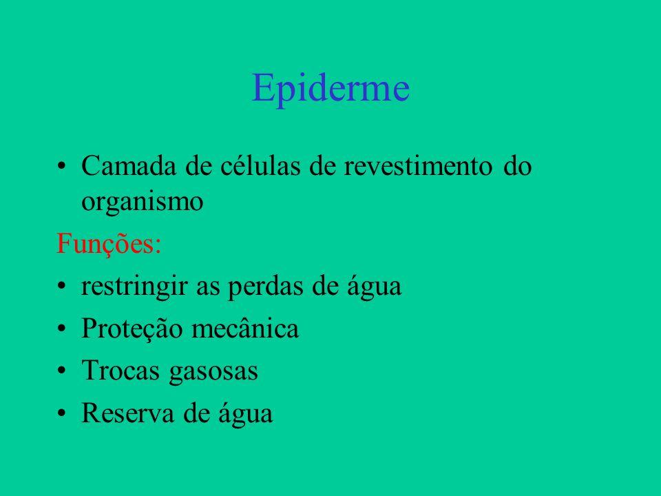Epiderme Camada de células de revestimento do organismo Funções: restringir as perdas de água Proteção mecânica Trocas gasosas Reserva de água