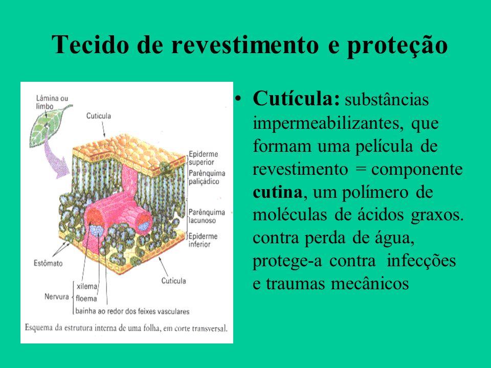 Tecido de revestimento e proteção Cutícula: substâncias impermeabilizantes, que formam uma película de revestimento = componente cutina, um polímero d