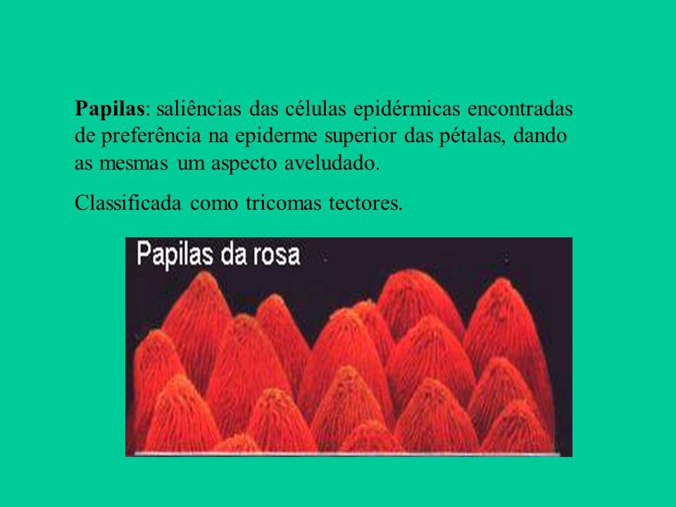 Papilas: saliências das células epidérmicas encontradas de preferência na epiderme superior das pétalas, dando as mesmas um aspecto aveludado. Classif