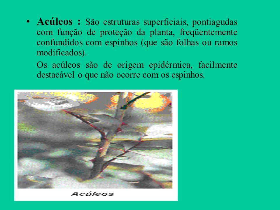 Acúleos : São estruturas superficiais, pontiagudas com função de proteção da planta, freqüentemente confundidos com espinhos (que são folhas ou ramos