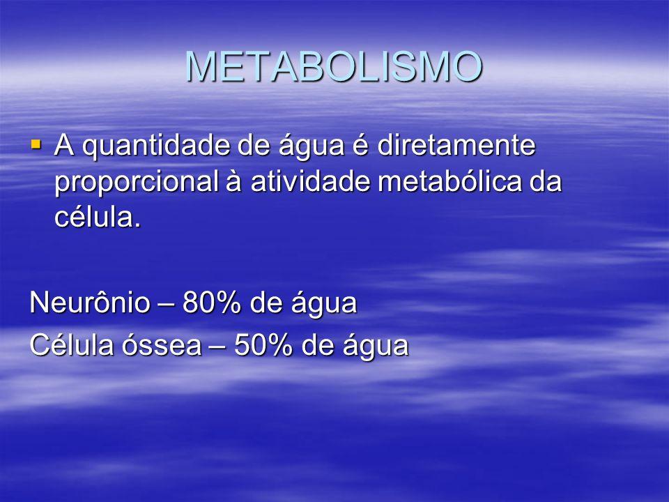 METABOLISMO A quantidade de água é diretamente proporcional à atividade metabólica da célula. A quantidade de água é diretamente proporcional à ativid