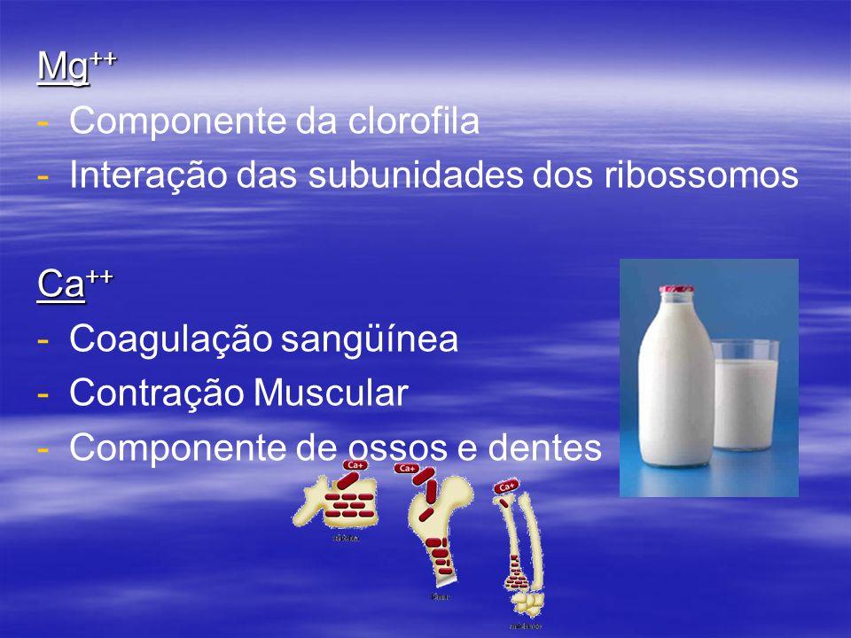 Mg ++ - -Componente da clorofila - -Interação das subunidades dos ribossomos Ca ++ - -Coagulação sangüínea - -Contração Muscular - -Componente de osso