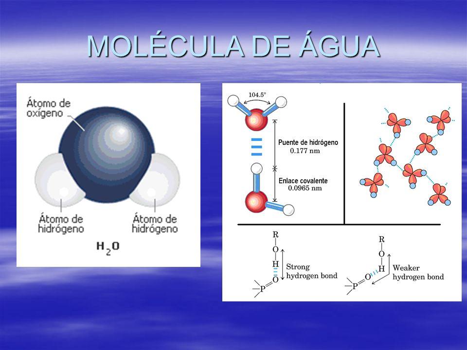 PROPRIEDADES DA ÁGUA SOLVENTE UNIVERSAL SOLVENTE UNIVERSAL A água dissolve vários tipos de e, como vários sais e açúcar, e facilita sua interação química, que ajuda metabolismos complexos.