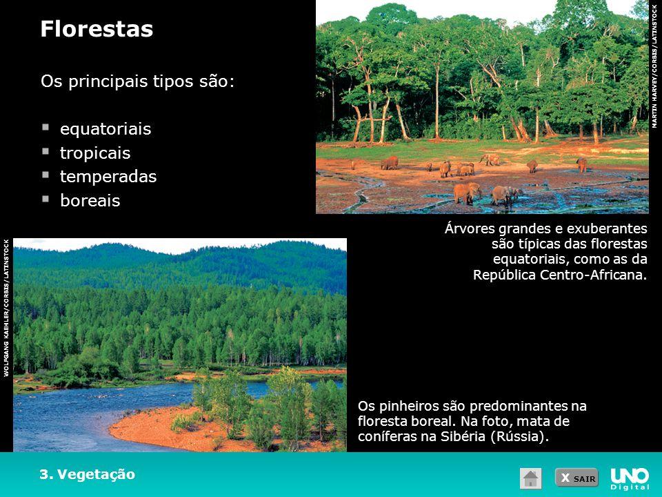 X SAIR MARTIN HARVEY/CORBIS/LATINSTOCK 3. Vegetação Florestas WOLFGANG KAEHLER/CORBIS/LATINSTOCK Os principais tipos são: equatoriais tropicais temper
