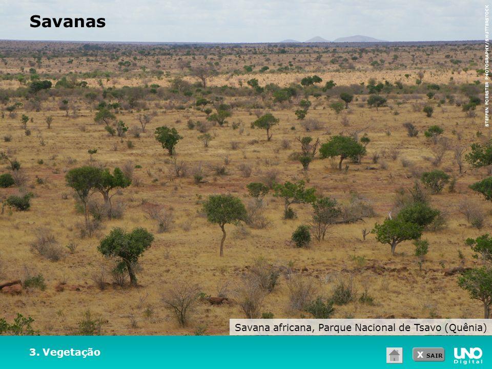 X SAIR 3. Vegetação Savana africana, Parque Nacional de Tsavo (Quênia) Savanas STEFFEN FOERSTER PHOTOGRAPHY/SHUTTERSTOCK