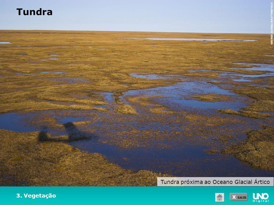 X SAIR 3. Vegetação Tundra Tundra próxima ao Oceano Glacial Ártico GEORGE BURBA/SHUTTERSTOCK