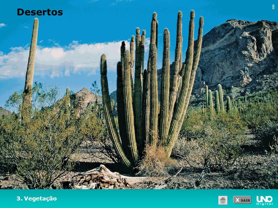 X SAIR CID 3. Vegetação Desertos