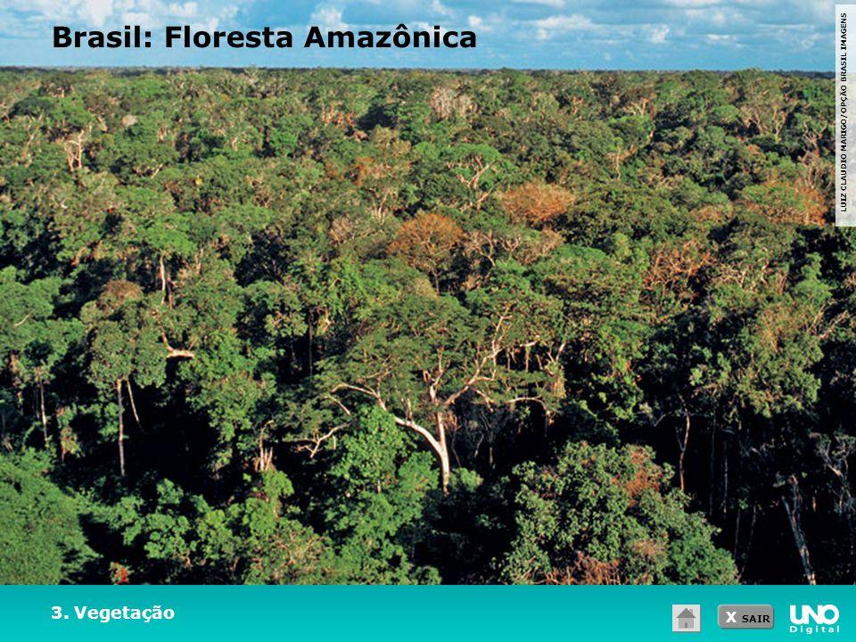 X SAIR LUIZ CLAUDIO MARIGO/OPÇÃO BRASIL IMAGENS 3. Vegetação Brasil: Floresta Amazônica