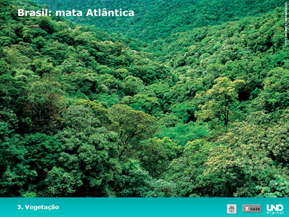 X SAIR TONY GENÉRICO/SAMBAPHOTO 3. Vegetação Brasil: mata Atlântica